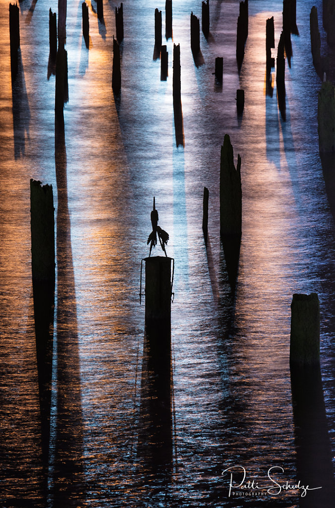 Pilings at night